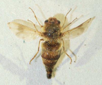 kunnen mieren bijten