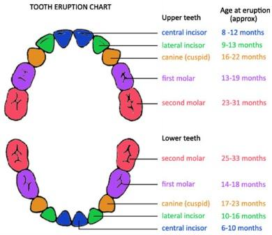 tooth-chart
