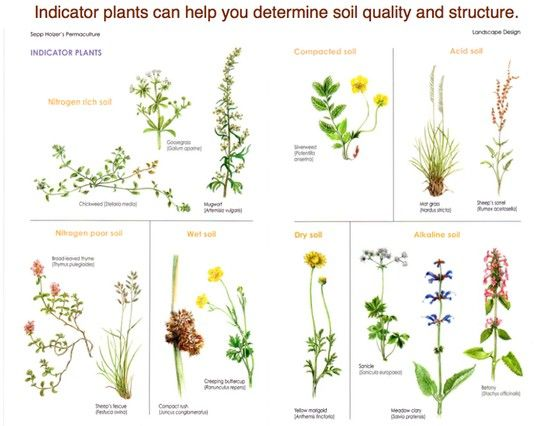 indicatorplants